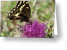 Thistle While You Work Greeting Card
