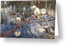 Thistles And Geese  Greeting Card