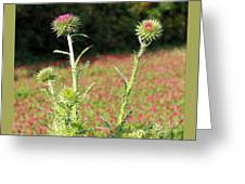 Thistles In A Field Of Clover Greeting Card