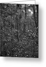 Thoreau Woods Black And White Greeting Card