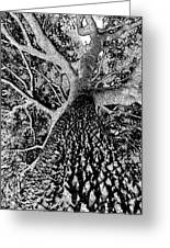 Thorn Tree Black And White Greeting Card