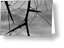 Thorns In Silouette Greeting Card