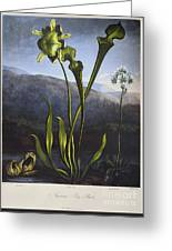 Thornton: Bog Plants Greeting Card