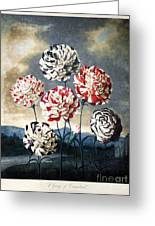 Thornton: Carnations Greeting Card