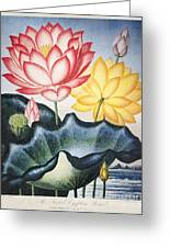 Thornton: Lotus Flower Greeting Card
