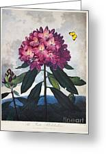 Thornton: Rhododendron Greeting Card