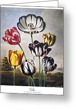 Thornton: Tulips Greeting Card