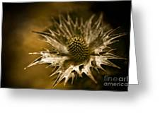 Thorny Crown Greeting Card