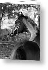 Thoroughbred - Black And White Greeting Card