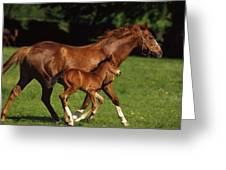 Thoroughbred Chestnut Mare & Foal Greeting Card