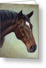 Thoroughbred Horse, Brown Bay Head Portrait Greeting Card