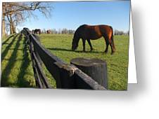 Thoroughbred Horses In Kentucky Pasture Greeting Card