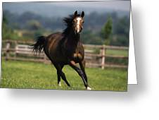 Thoroughbred Horses, Yearlings Greeting Card by The Irish Image Collection
