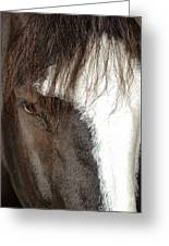 Thoroughbred Portrait One Greeting Card