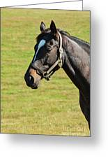 Thoroughbred Portrait Three Greeting Card