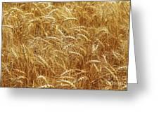 Those Beautiful Waves Of Grain Greeting Card
