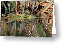 Those Eyes Frog Eyes Greeting Card