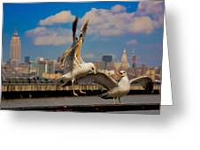 Those Jersey Gulls  Greeting Card