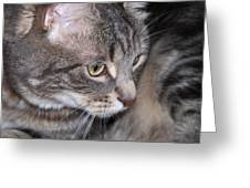 Thoughtful Holly The Cat Greeting Card