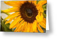 Thoughts Of Autumn Greeting Card