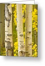 Three Autumn Aspens Greeting Card