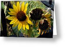 Three Beautiful Sunflower Greeting Card