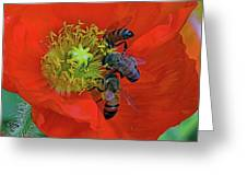 Three Bees At Lunch Greeting Card