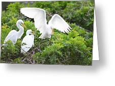 Three Birds Of A Feather Flock Together Greeting Card