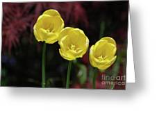 Three Blooming Yellow Tulips Of Different Heights Greeting Card