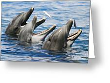 Three Bottlenose Dolphins Greeting Card