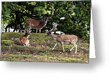 Three Bucks Greeting Card