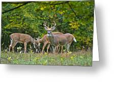 Three Bucks_0054_4463 Greeting Card