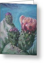 Three Cactus Blossoms Greeting Card