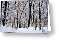 Three Creeks Conservation Area - Winter Greeting Card