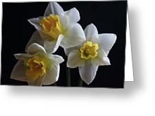 Three Daffodil Greeting Card