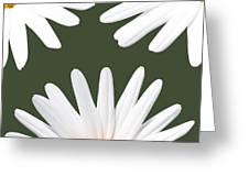Three Daisies Greeting Card