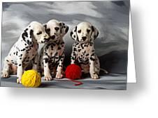 Three Dalmatian Puppies  Greeting Card by Garry Gay
