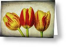 Three Dew Covered Tulips Greeting Card