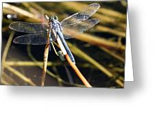 Three Dragonflies On One Reed Greeting Card