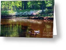 Three Ducks At The Azalea Pond Greeting Card