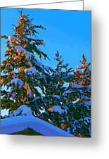 Three Evergreens Greeting Card