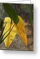 Three Exotic Leaves Greeting Card