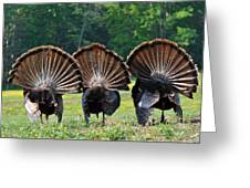 Three Fans Greeting Card by Todd Hostetter