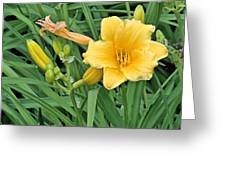 Three Flower Stages Greeting Card