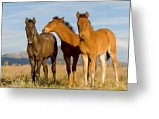 Three Foals Greeting Card
