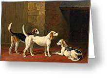 Three Fox Hounds In A Paved Kennel Yard Greeting Card