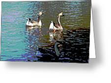 Three Geese Swimming Greeting Card