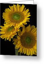 Three Golden Sunflowers Greeting Card