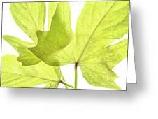 Three Green Leaves Greeting Card