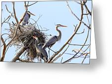 Three Herons Greeting Card